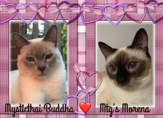 Morena e Buddha