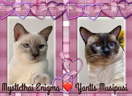 Enigma e Yantis